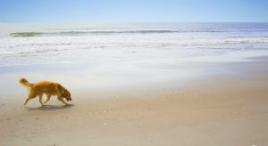 Named USA Today's Top 10 Pet Friendly Beaches