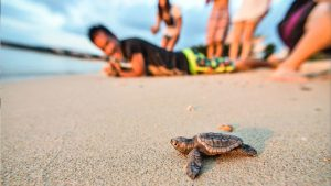 Baby Turtle with Man in Background Image