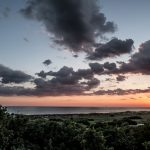 Discover Life on the High Dunes of Bald Head Island