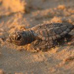 Let's Shell-lebrate Nesting Season!